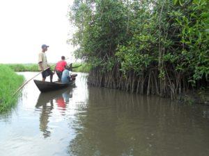 De l'importance de la mangrove…